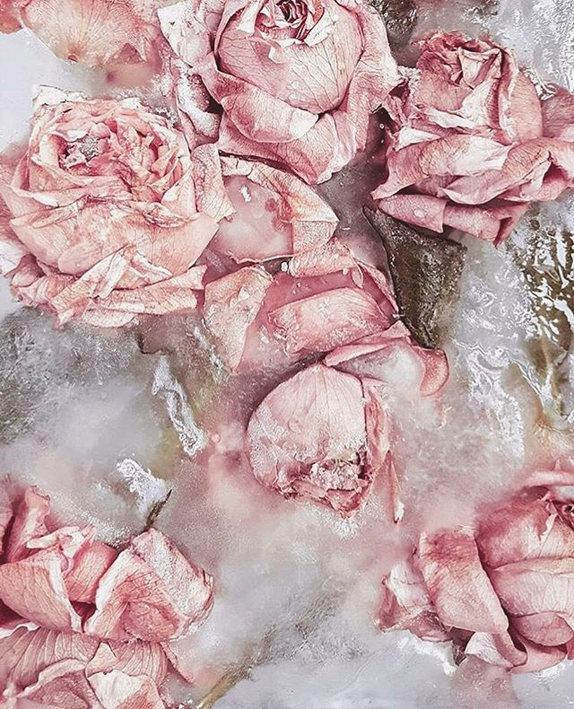 I LOVE this frozen roses idea! Also... Roses are red, Violets are blue... I am a WEEN and I know you want to be one TOO! 💁🏻‍♀️ #JoinTheWeenCrew
