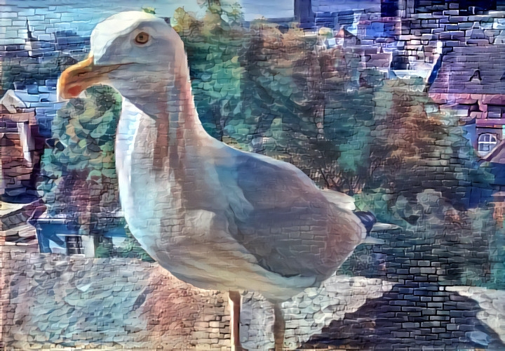 Steven the seagull of Tallinn with his own Instagram account x local street art.