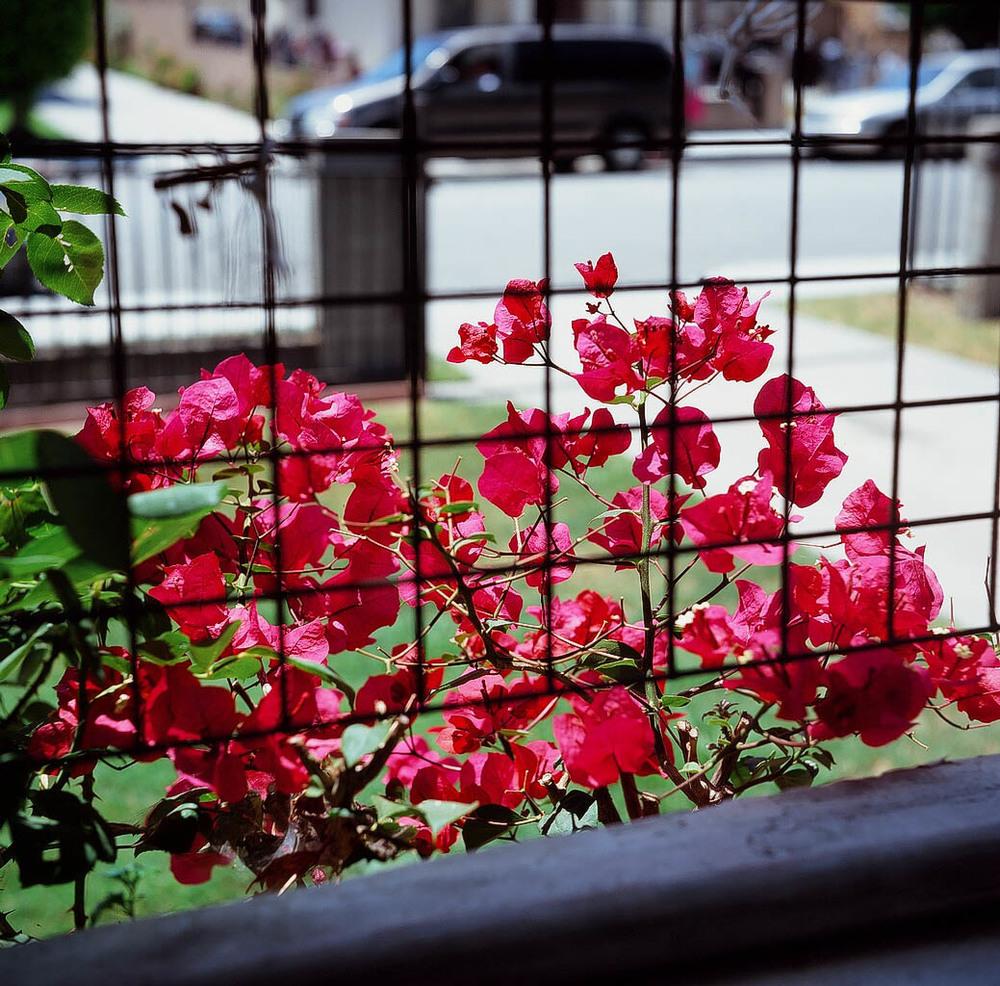 A Vibrant Garden.JPG