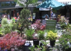 High Country Nursery   Tom and Debbie Ross  wnchighcountry@gmail.com  (828) 216-9311