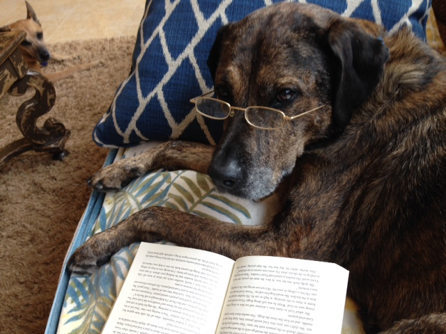 Most importantly, four-legged test reader Brandy Thompson approves of  Bouncing Forward ! Her rating: absolutely pawsome!