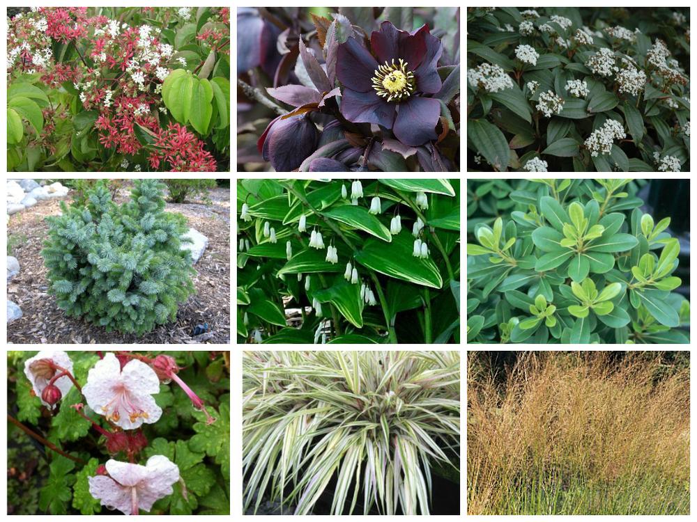 SandPointCC-plants-1.jpg