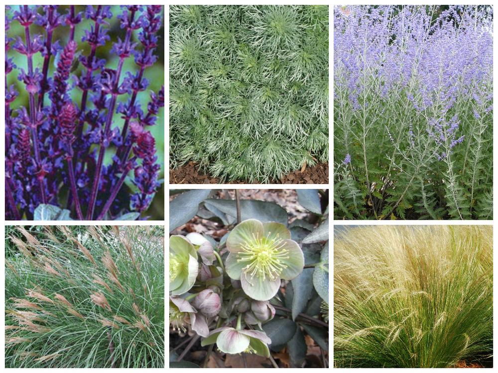 SandPointCC-plants-2.jpg