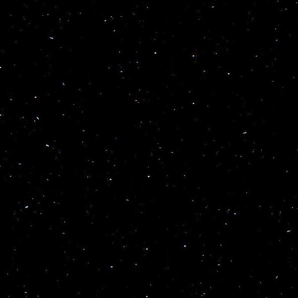Perna Black P004