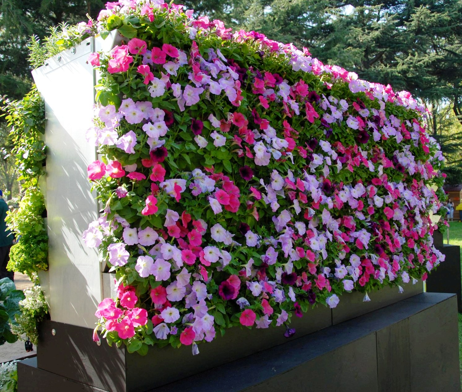 10 Things To Consider Before Choosing A Vertical Garden Or Greenwall System Eden Now Instant Vertical Gardens Greenwall Melbourne