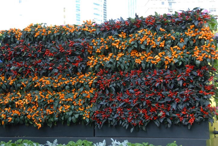 vertical garden DIY kit Mobiwall