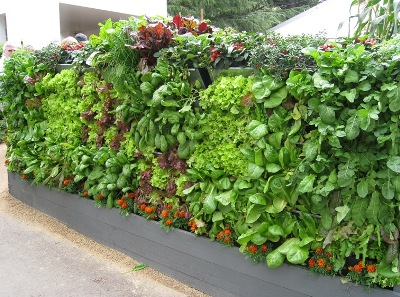 vertical garden DIY kit -  mobiwall