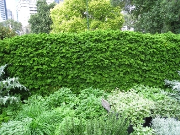 vertical garden-greenwall