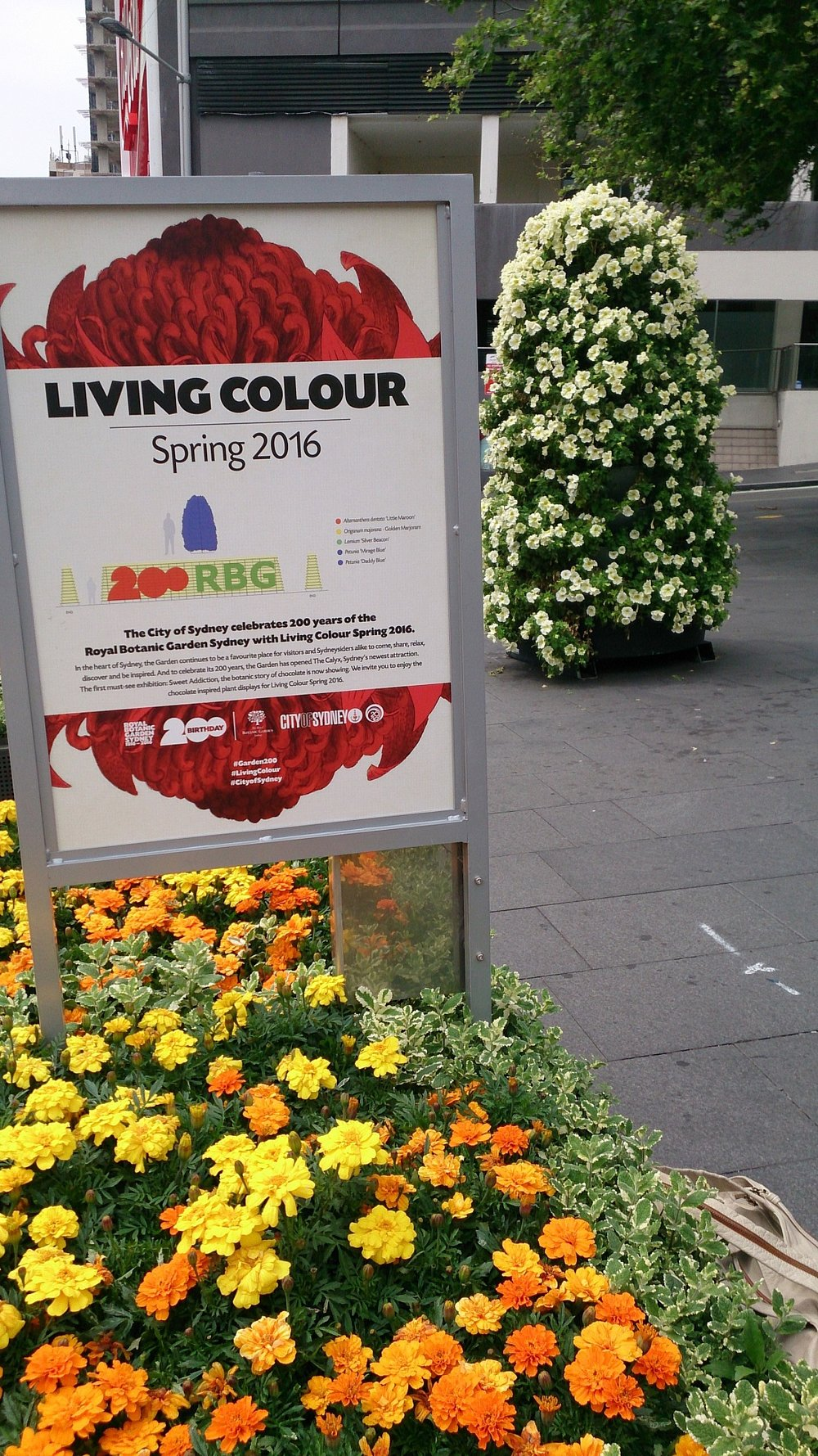 Sydney Living Colour and Garsy Flower Tower.jpg
