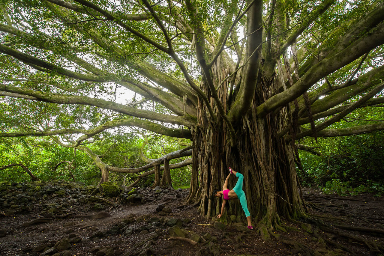 Banyan Tree - One of the most beautiful trees I've ever seen  Pipiwai Trail | Haleakalā National Park | Hāna | Maui | Hawaii
