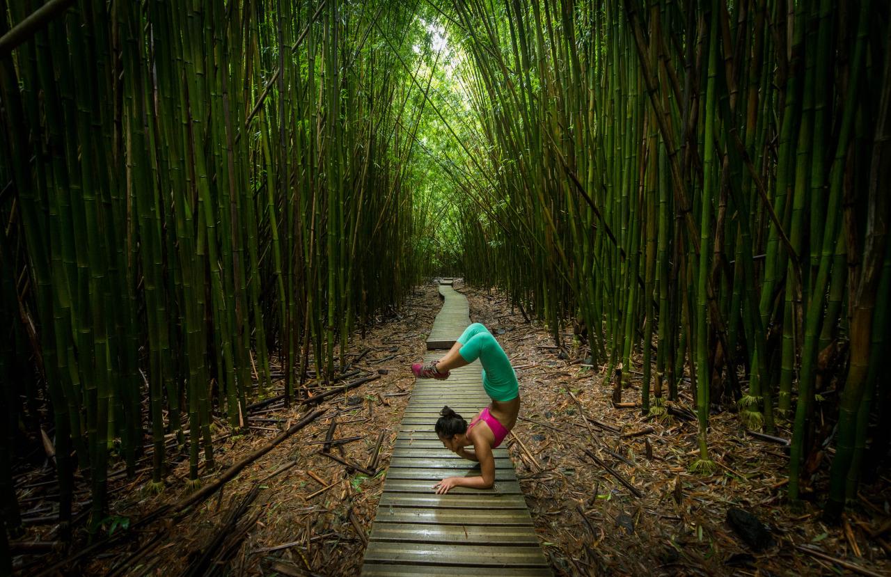 Loving this bamboo forest  Vrschikasana Variation   Pipiwai Trail | Haleakalā National Park | Hāna | Maui | Hawaii