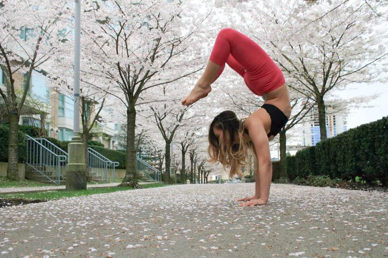 Vrischikasana | Handstand | Scorpion Pose  Cherry Blossoms | Vancouver | British Columbia | Canada   Instagram  |  Facebook  |  Twitter