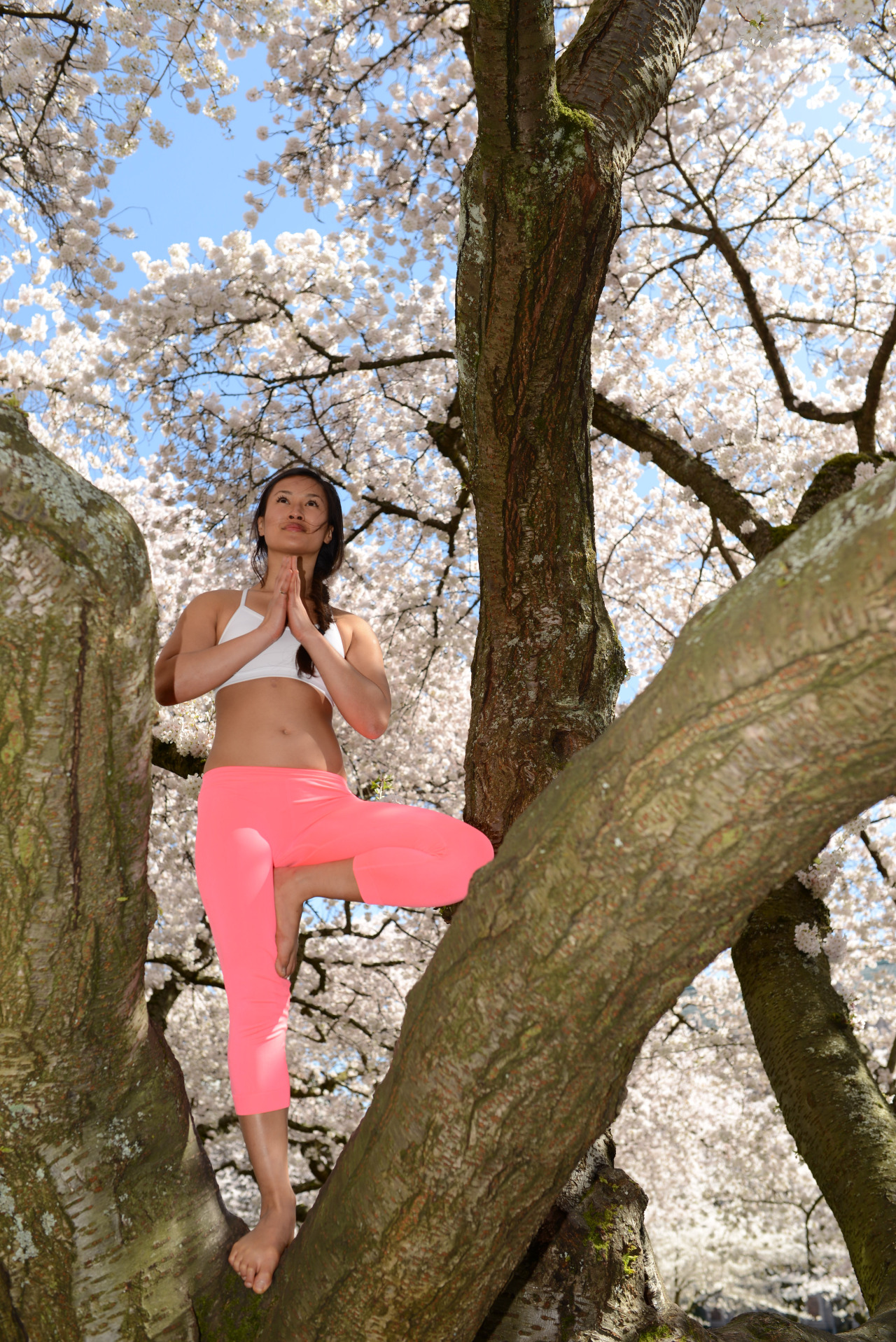 Vrschikasana | Tree Pose  Cherry Blossoms | Universtiy of Washington | Seattle | Washington | USA