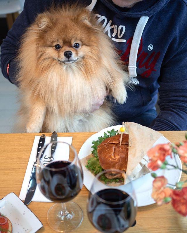 Tänään ei ulkoilu innosta, joten tämä suloinen tyyppi päätti lähteä sadetta pakoon Kortteliin!☔ Hyvinkäyttäytyvät koiraystävät ovat hyvin tervetulleita meidän Korttelin ravintolamme🐶 #storykortteli #koiraystävällinenravintola