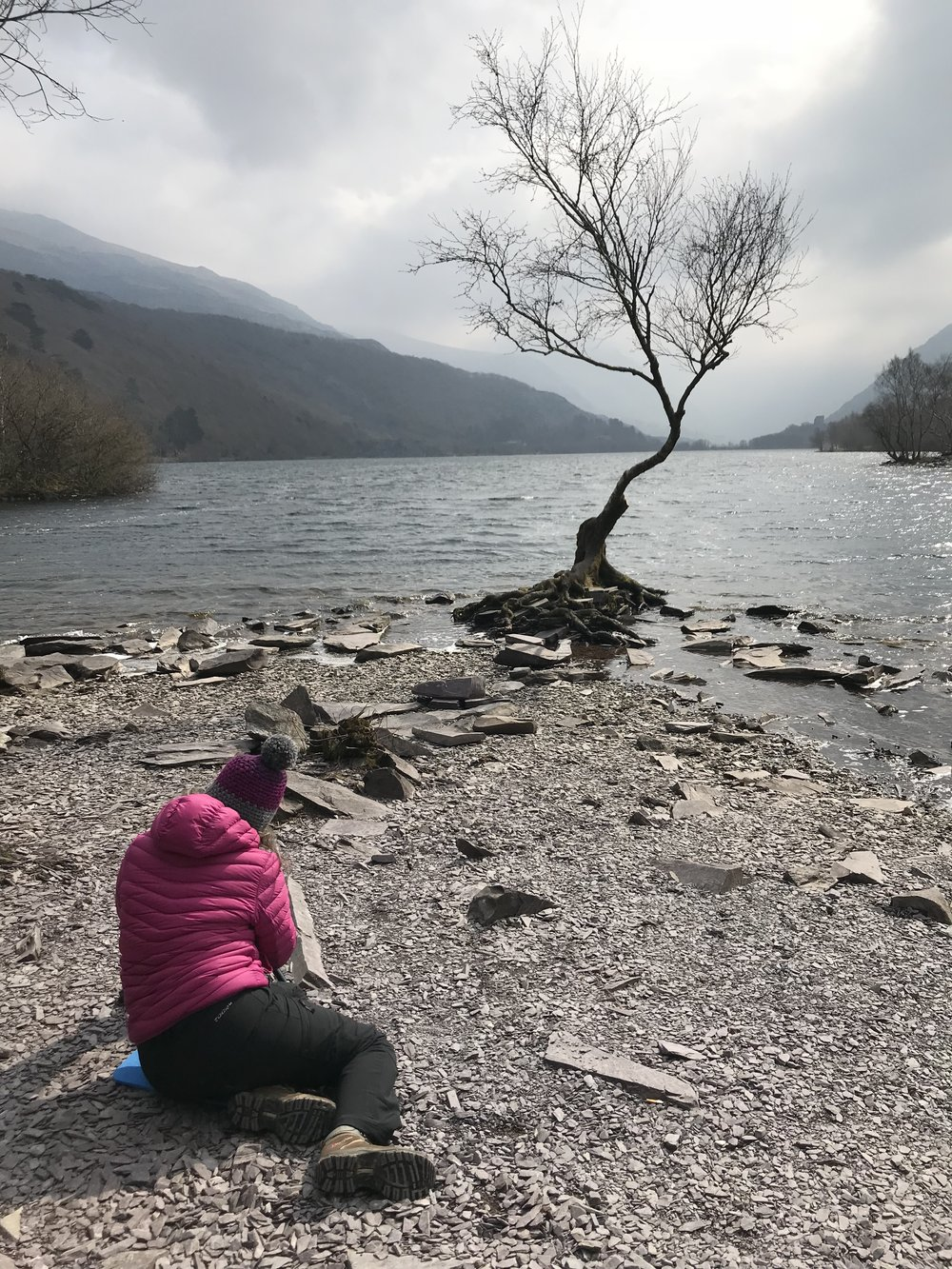 Hilary by 'that tree' at Padarn, Llanberis
