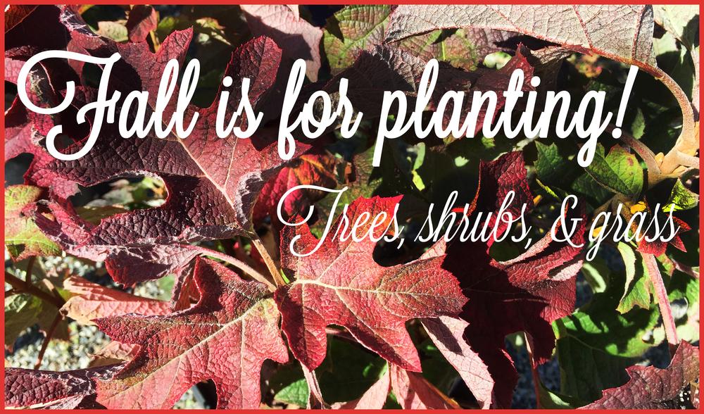 fallisforplanting.jpg