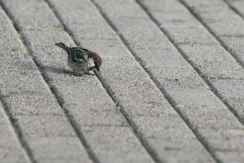 Hey birdie!