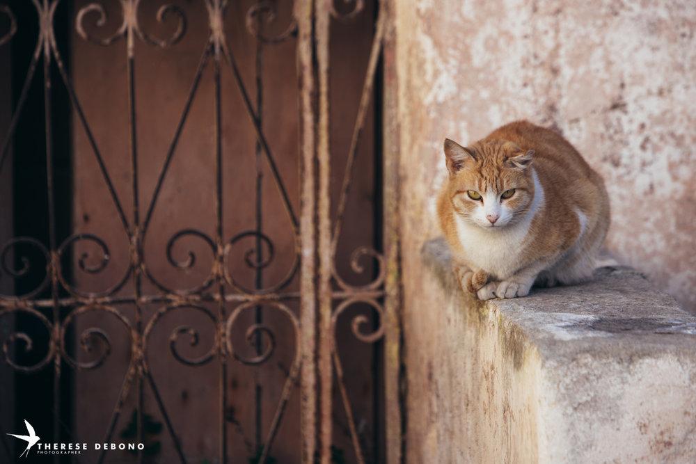 Neighbourhood watch...the ginger cat