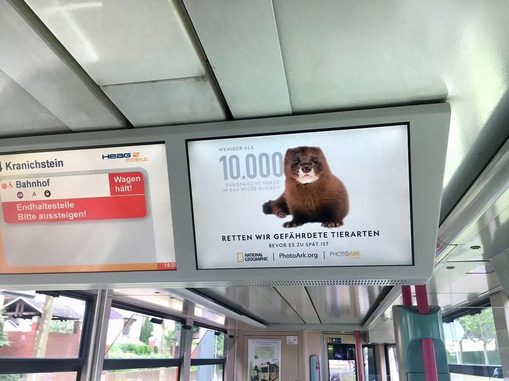 DOOH Kampagne_National Geographics_DA_Bildschirmwerbung_Motiv 4_180523_klein.jpg