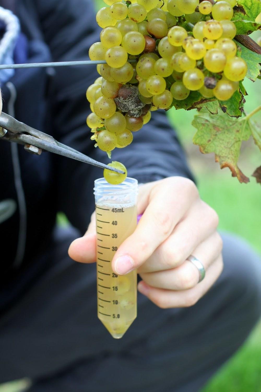 trillium-brewing-grapes.jpg