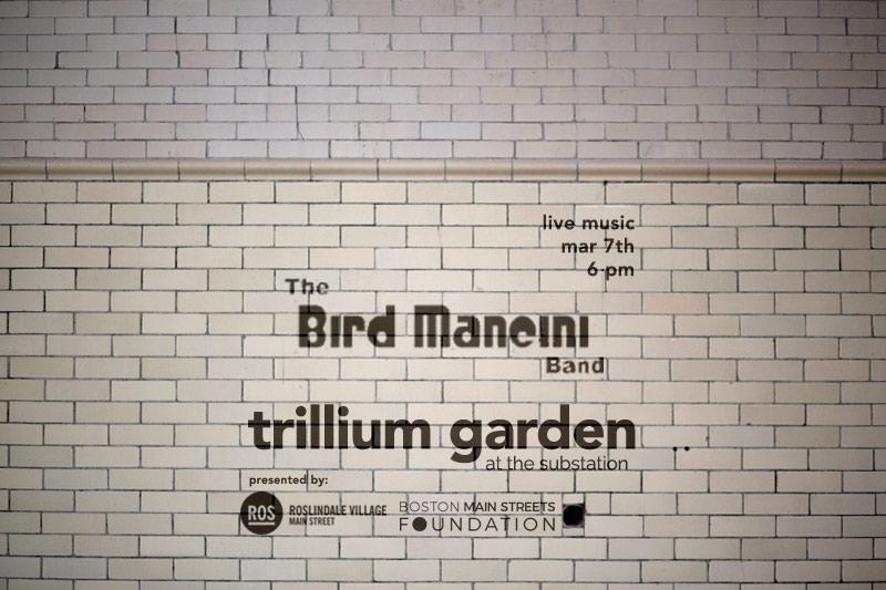 birdmancini2.jpg