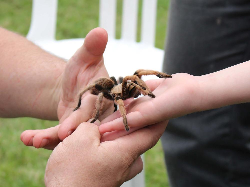 spider-710855_1280.jpg
