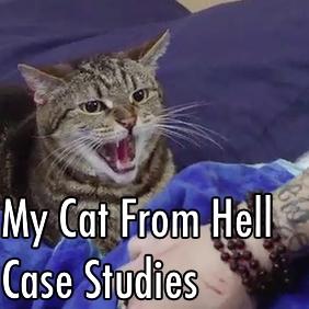 mcfh  case studies.jpg