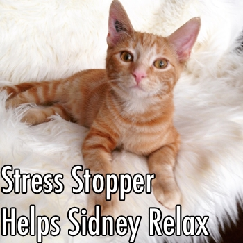 stress stopper sidney.jpg