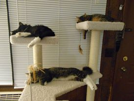 cat_naps.jpg