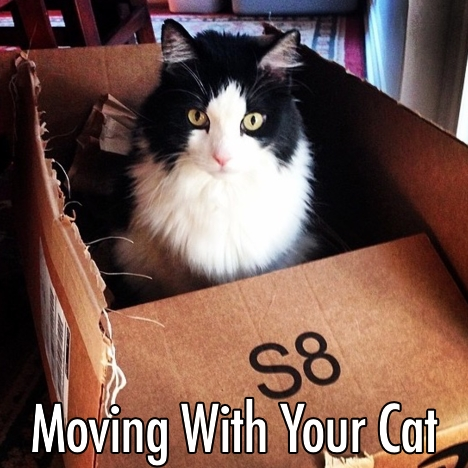 moving with your cat.jpg