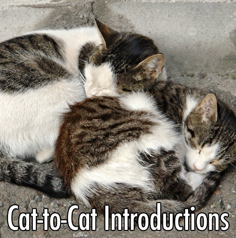 cat to cat.jpg