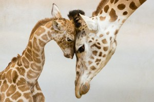 animal-parents-5-300x200.jpg