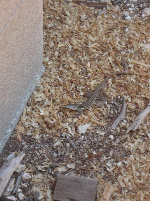 lizardlookin.jpg