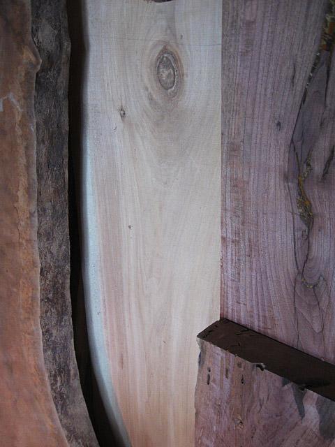 1016texaswoods1b.jpg