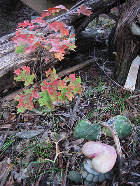 fall17dec21.jpg