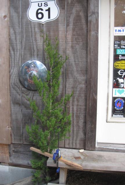 christmastree17.jpg