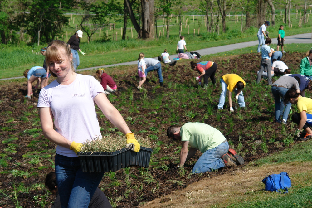 Goddard park planting (c) North Creek Nurseries