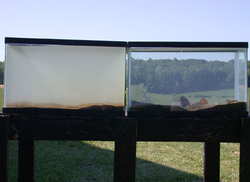 These tanks, filled with water from the same source, show how mussels can filter the water. The tank on the right has mussels. The tank on the left doesn't. © 2013 Virginia Polytechnic Institute and State University