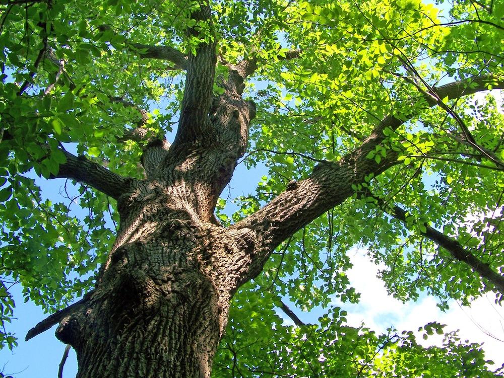 tree_197223