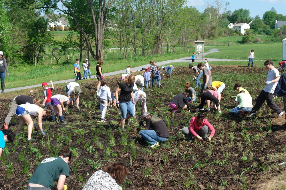 Volunteers planting larger rain basin at Goddard Park. (c) North Creek Nurseries