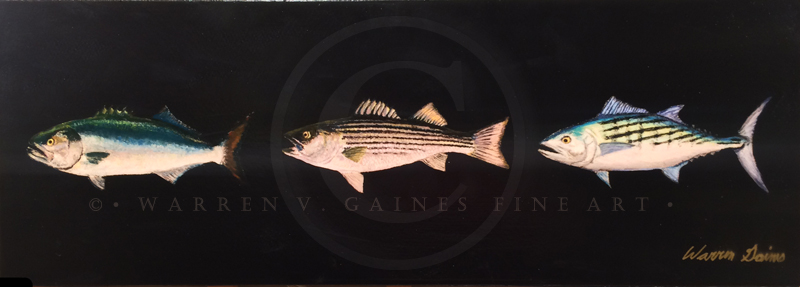 Martha's Vineyard Bass and Bluefish Derby Fish Triptych