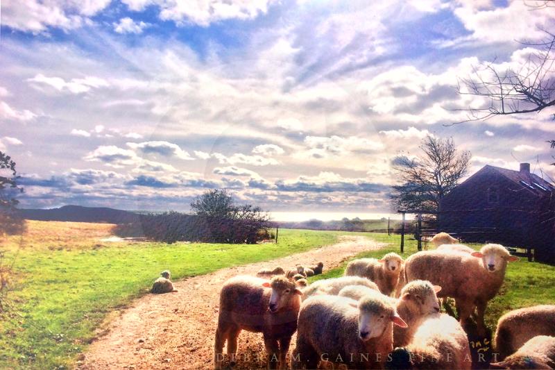 Lamb Chops with a View_0373_COPYWRITTEN.jpg