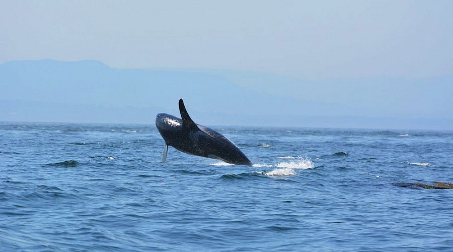 Book your One Day Bike Tour + Whale Watching Adventure in Victoria BC!
