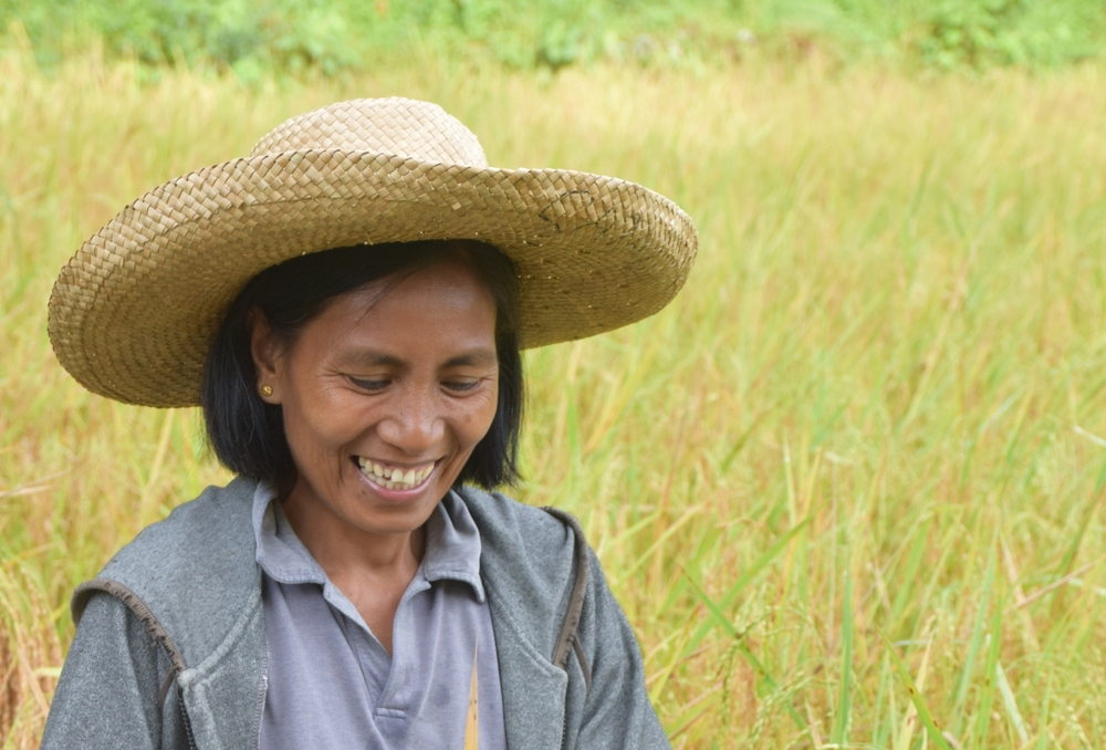 Lily rice farmer philippines