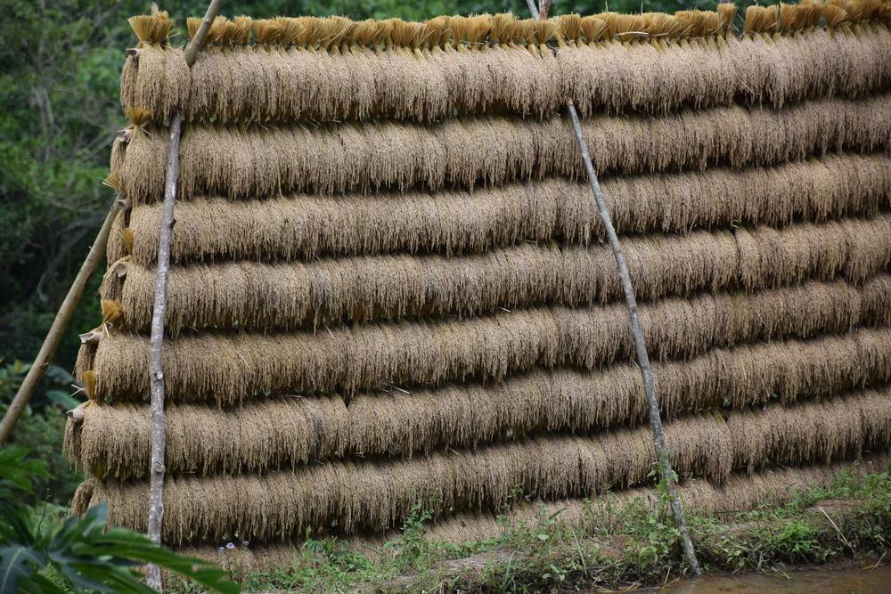 Rice storage in philippines