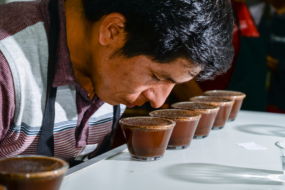 coffee cupping in peru