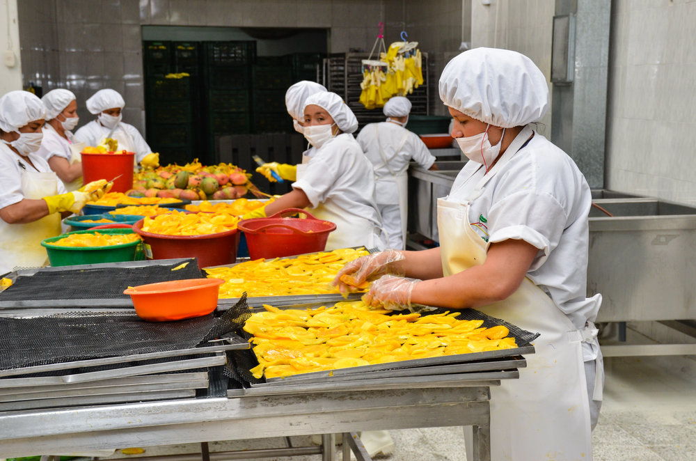 Workers at Fruandes cut, sort and dry the mangoes.
