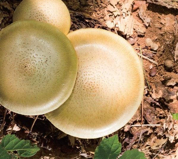 Takahiro Kawaguchi/Utah Kawasaki - Amorphous Spores
