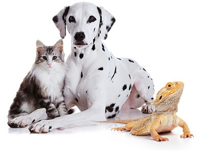 Pet Sitting Runcorn Cats Dogs Tropical