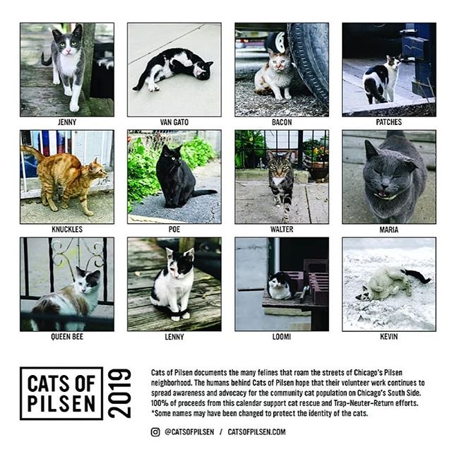 Check out @catsofpilsen calandar! Proceeds go back to @chicagoanimaladvocates to help TNR southside cats. Limited supply, get yours for $18 before they're gone forever!  Check my bio for the link.  #cats #catsofchicago #chicagocats #catsofinstagram #feralcat #teameartip #hoodcat  #trashcats #instapurrs #kittens #kittenseason #tnr #tna #meow #purrs #catsofig #catsofinsta #catstagram #kittensofinstagram #igdaily #l4l #dailyfluff #dailygram #trapneuterreturn #adorable